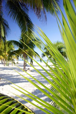 rampant: Palm tree foliage on tropical beach