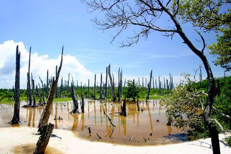 petrified fossil: Celestun in the Yucatan, Mexico.