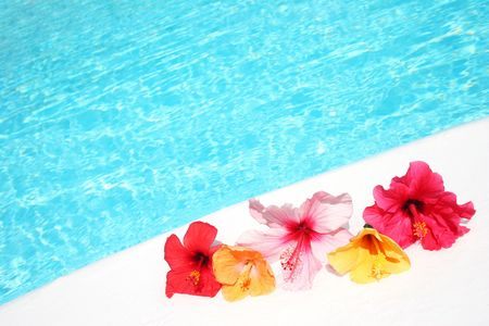 Varied hibiscus flowers by bright pool