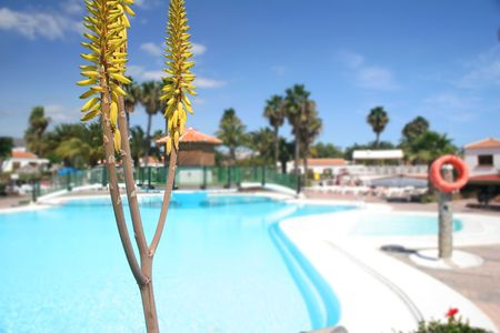 aloe flower: Aloe flower spike with pool background