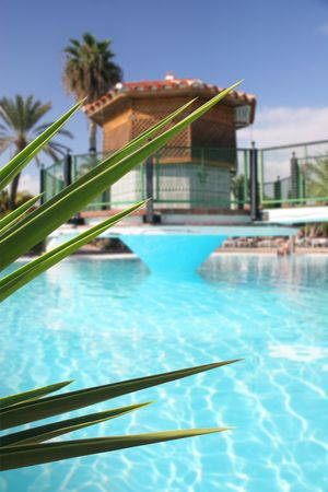 Tropical swimming pool with foliage foreground Stock Photo - 341754