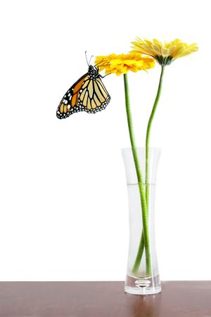 pollinate: Two yellow gerbers in a glass vase ona dark table