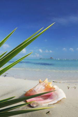Tropical seashell with green foliage photo