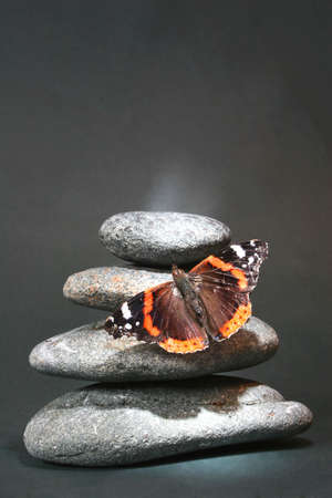 red pebble: Pebble stack with red admiral butterfly; butterfly is lit up by shaft of sunlight