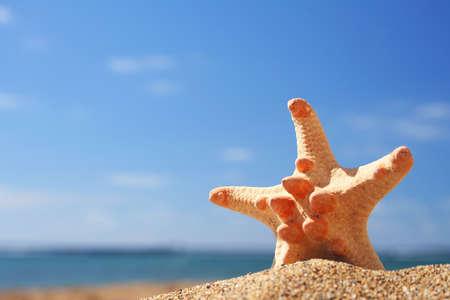 Starfish on tropical beach Stock Photo - 416534