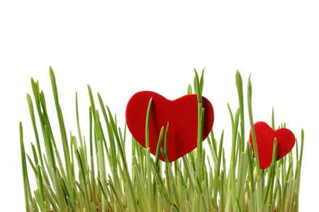 wśród: Czerwone serca wśród zielonej trawie