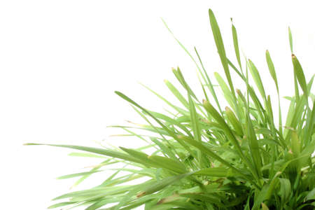 Natural grass against white background Stock Photo