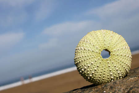echinoderm: Sea urchin shell on the beach with blue sky Stock Photo