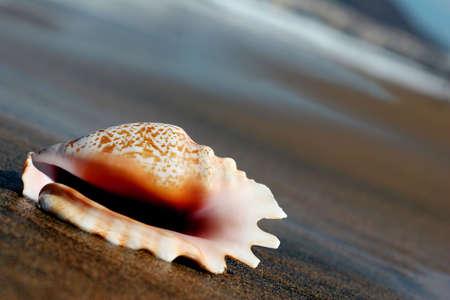 waterside: Seashell on the seashore at the waterside Stock Photo