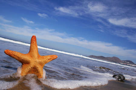 echinoderm: Starfish on the beach with blue sky, wave and foam