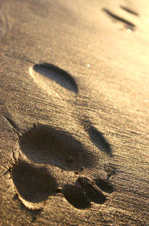 ephemeral: Footprint trail in golden sand at sunset Stock Photo