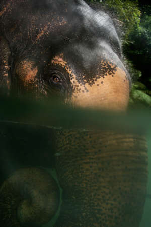 river trunk: Elephant in river with eye above water and trunk underneath