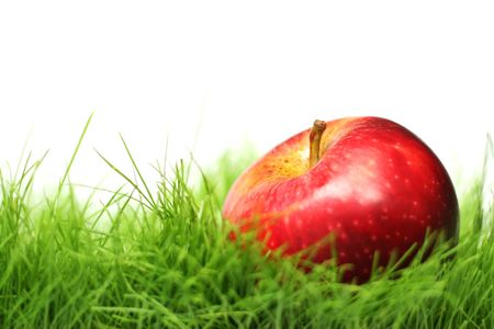 apple orchard: Red apple in green grass with white background. Shallow DoF with focus on the stalk