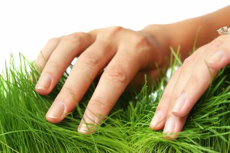 parting: Female hands parting fresh green grass with white background Stock Photo