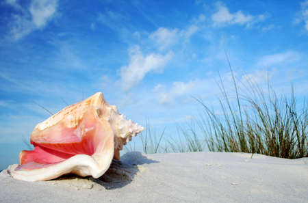 Tropical beach with vegetation and pink queen conch Stock Photo - 679118