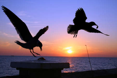 Two seagulls swooping down to steal cut bait on a pier at sunset photo