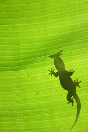 hopper: Green jungle leaf with gecko on top