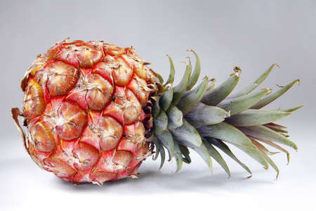 Colorful pineapple with even light and background photo