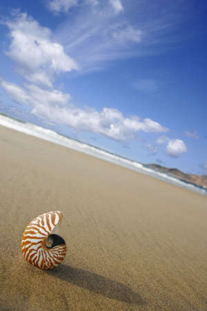 Nautilus on the water's edge on sandy beach Stock Photo - 907539