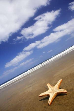 Starfish stranded on a sunny beach with blue sky