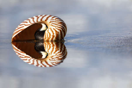 waters  edge: Nautilus on the waters edge on sandy beach
