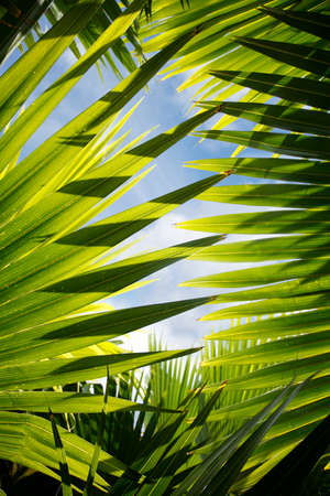 jungle foliage: Backlit jungle leaves with blue sky visible