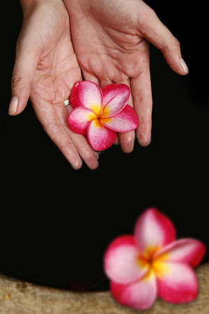 scooping: Hands scooping pink magnolia flowers from deep pool