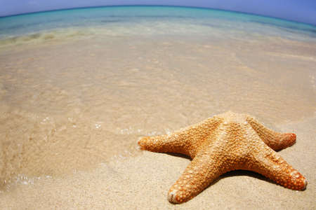 wideangle: Starfish on the beach with wide-angle distorted horizon Stock Photo