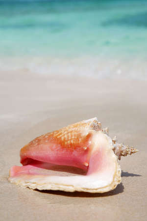Queen Conch shell on a tropical beach