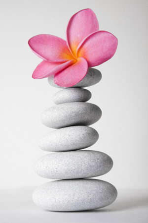 frangipanis: Stack of white pebbles and pink frangipani flower