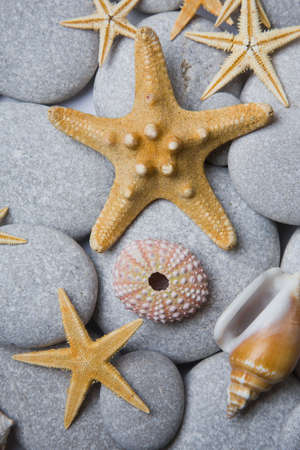 Nice background with starfish,seashells and a sea urchin photo