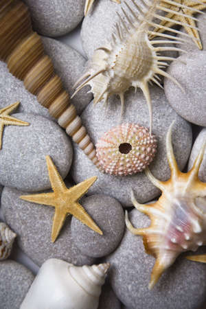 Nice background with seashells and starfish photo