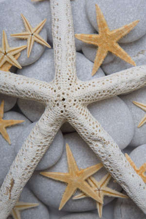 Nice background with starfish photo