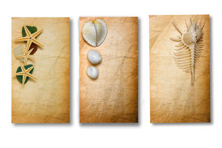 Three bits of old paper decorated with seashells photo