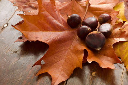 Russet toned Autumn leaves and fresh chestnuts Stock Photo