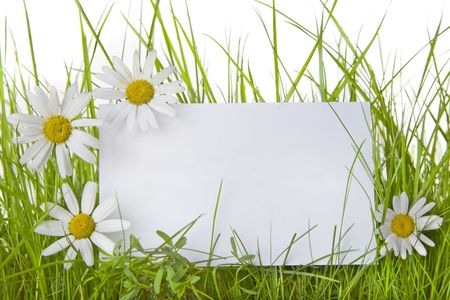White sign amongst grass with white daisies