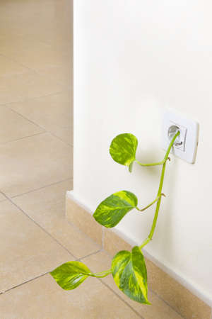 socker: Fresh green shoot growing out of an electricity socket.