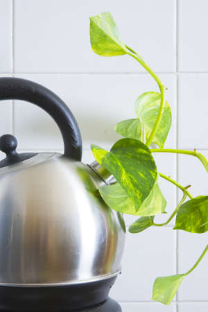 socker: Fresh green shoot growing out of an electric kettle Stock Photo