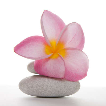 Single pink frangipani or plumeria flower on two white pebbles, Isolated over white in studio. Stock Photo