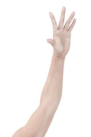 muscle arm: Arm Stock Photo