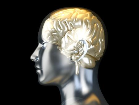 The Human Brain. 3D rendered anatomical illustration. illustration