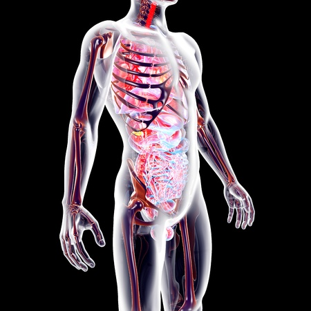 The internal adrenal Organs. 3D rendered anatomical illustration. Stock Illustration - 22092771