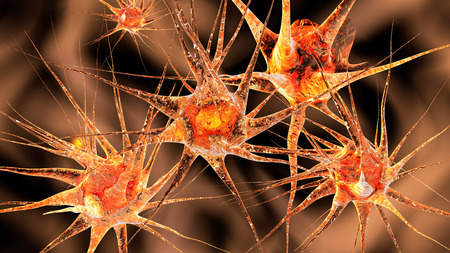 neurons: 3D Illustration of neuronal cells.