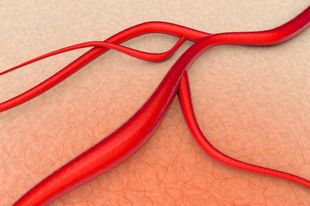 blood vessel: A blood vessel on organic Tissue  3d illustration