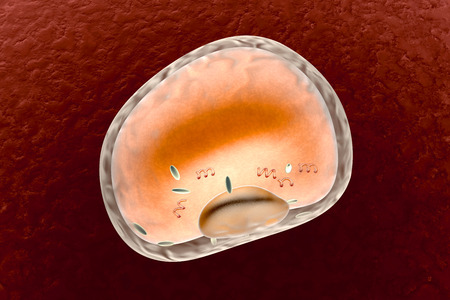 A detailed fat cell. 3d rendered Illustration. Isolated on black. illustration