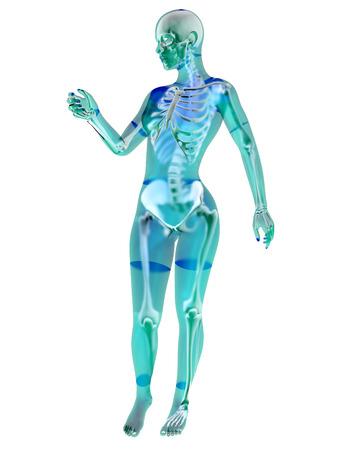 human skeleton: Female anatomy visualization. 3D Illustration isolated on white.