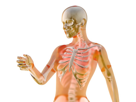 Female anatomy visualization. 3D Illustration isolated on white. illustration