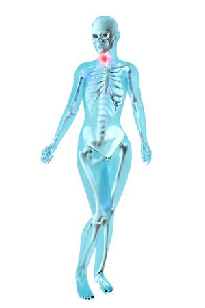 Female anatomy. Throat ache. 3D illustration. illustration