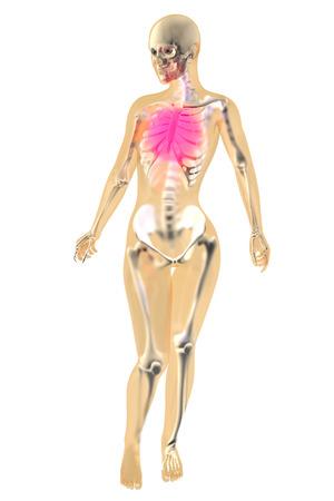 Female anatomy. Pain in the chest. 3D illustration. illustration