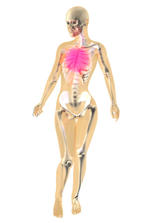 heartattack: Female anatomy. Pain in the chest. 3D illustration. Stock Photo